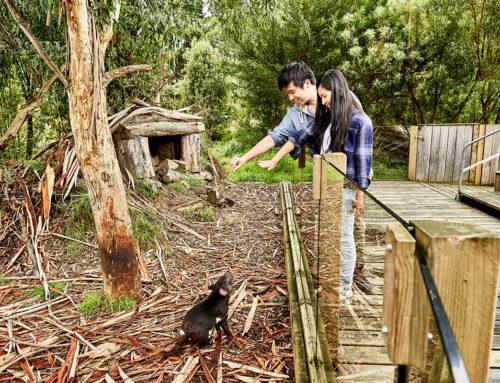 Tasmanian Devil Unzoo : Tourism Tasmania